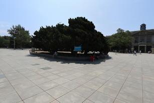 旅顺博物馆VR全景展示